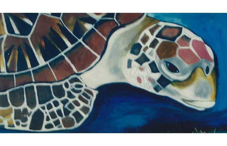 Turtle by June Boe