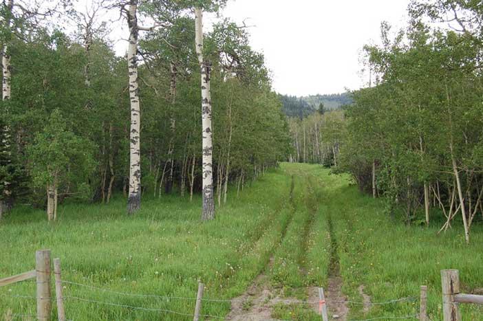 Northern Alberta by Linda Mae Stoddard
