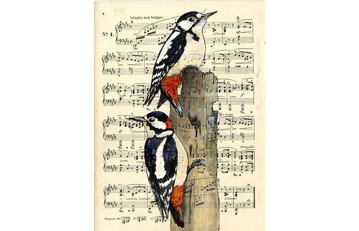 Great Spotted Woodpeckers on Mendelssohn by Veronica Roth