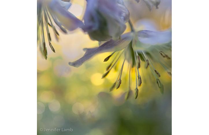Midsummer Muse by Jennifer Lamb