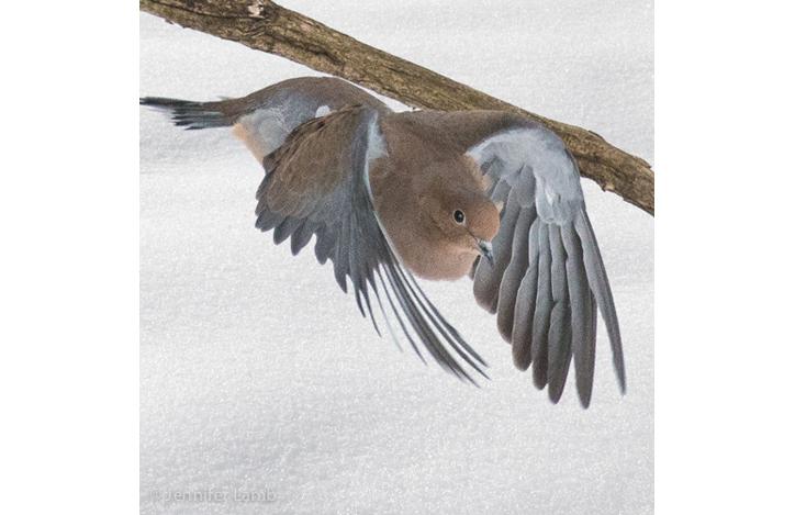 Swooping by Jennifer Lamb