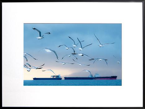 Wings over English Bay by Jennifer Lamb
