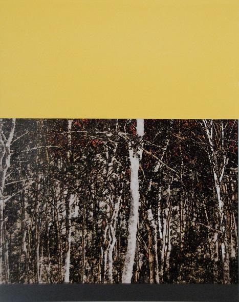 Birken by Jocelyn Fisk-Schleger