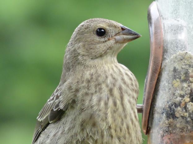 KristyWensveen-Wild-Bird-Facemount