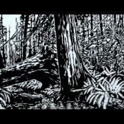 Elder Cedar by Rick Herdman