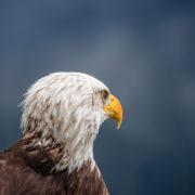 Eagle Eyes by Andrea Bruns