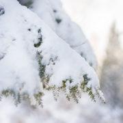 Winter Wonderland by Andrea Bruns